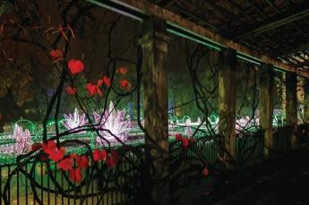 Warszawa Atrakcja Galeria Królewski Ogród Światła