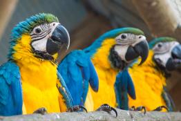 Warszawa Atrakcja Zoo Akademia Papug