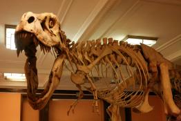Warszawa Atrakcja Muzeum Muzeum Ewolucji